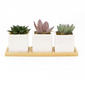3 Artificial Succulent Plants With Tray | Faux Plant And Ceramic Planter | Fake Plants Cactus Home Decor